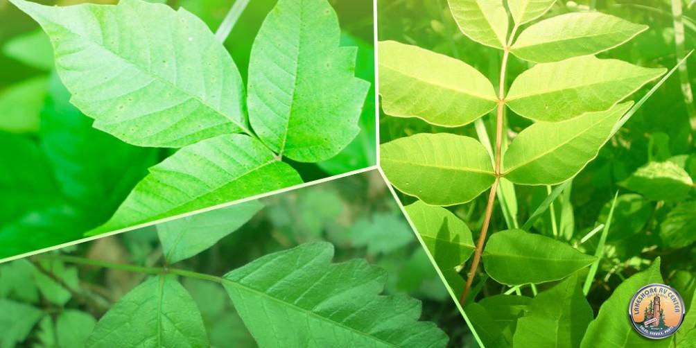 poinsonousplantsheaderimage copy