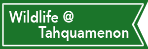 Tahquamenon State Park