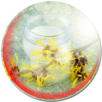 Natural Sunburn Remedies Witch Hazel Compress