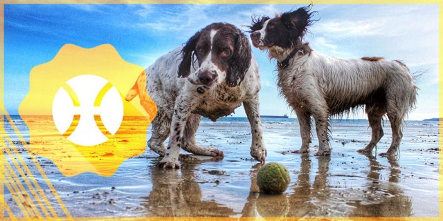Spaniels Beach Bathtime