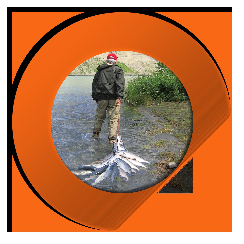 Man Pulling Salmon rivher