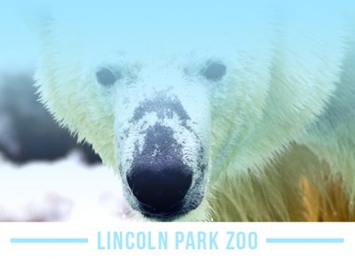 Visit Lincoln Park Zoo
