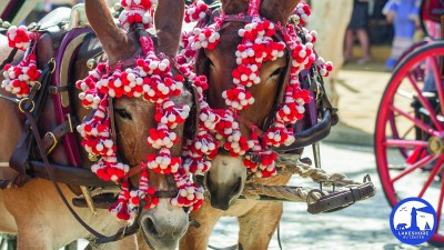 parade horse