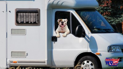 RVing with pets is a ball  bull dog hanging out the window of a motorhome RV