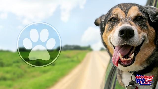 RV Traveling Pet Vet