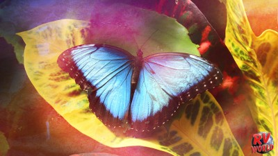 Blue butterfly sitting on colorful leaves