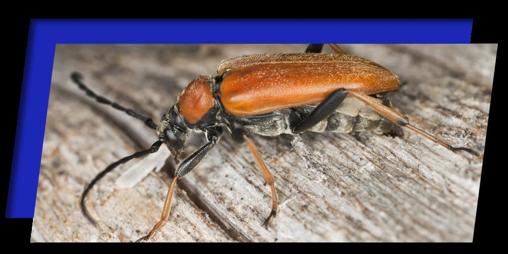 bug on a log