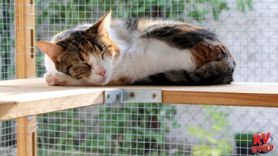 catio sleeping cat