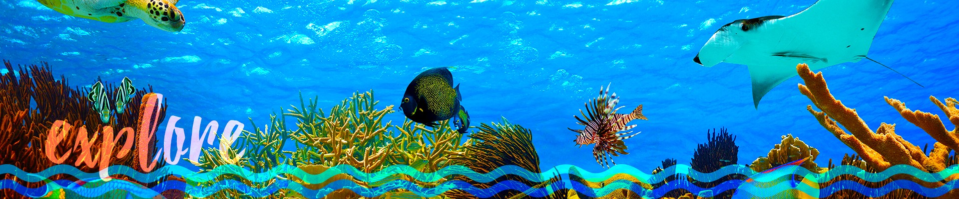 explore - John Pennekamp Coral Reef State Park