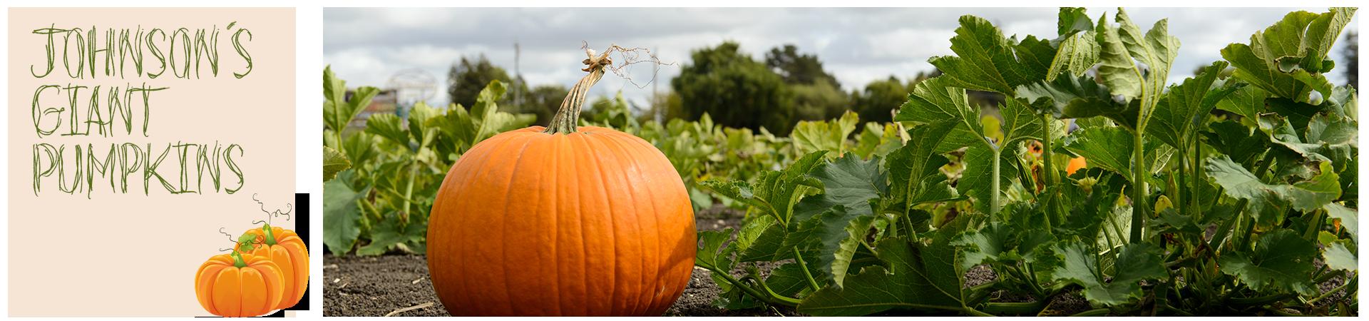 Pumpkin Patches Around Michigan Rv World Blog