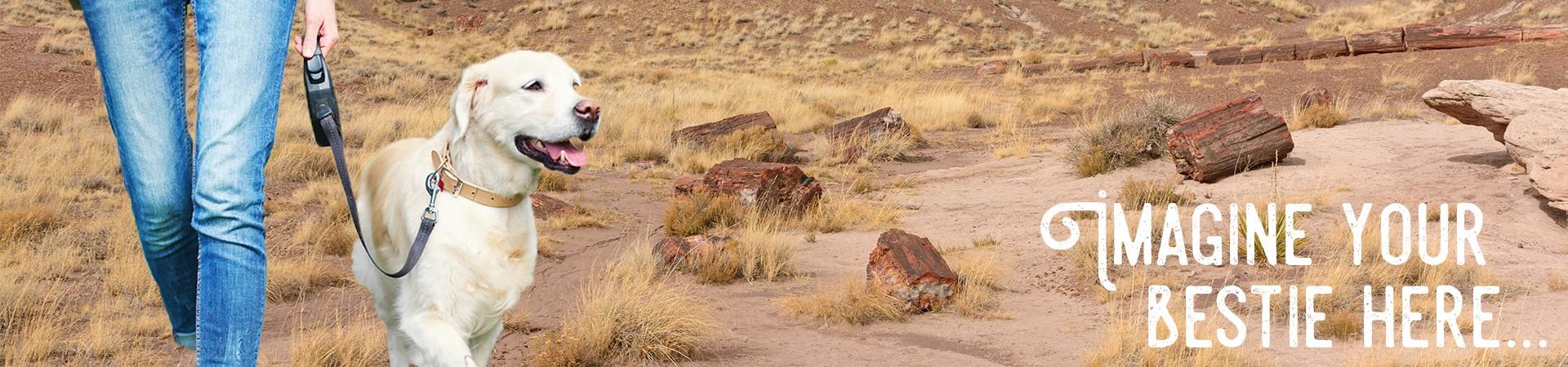 petrified-national-park-arizona
