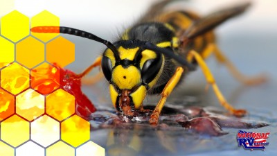 Hexagon pattern and wasp drinking jelly
