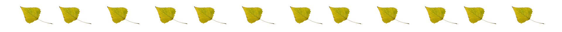 eastern cottonwood leaf