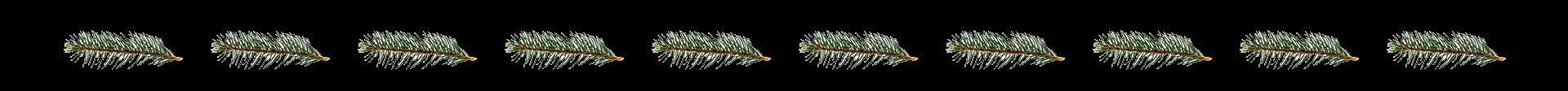 red spruce leaf