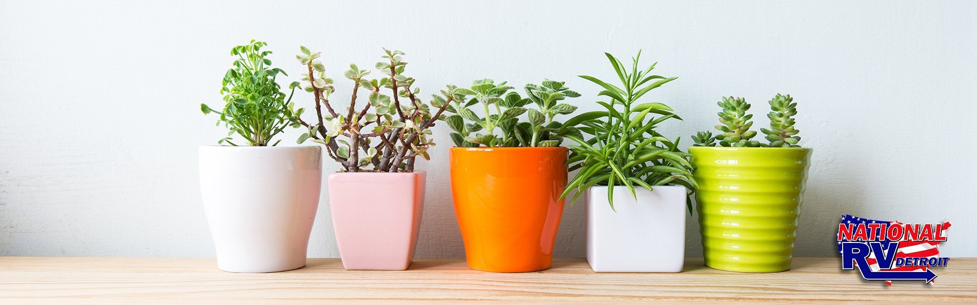 Indoor plants that improve your air quality