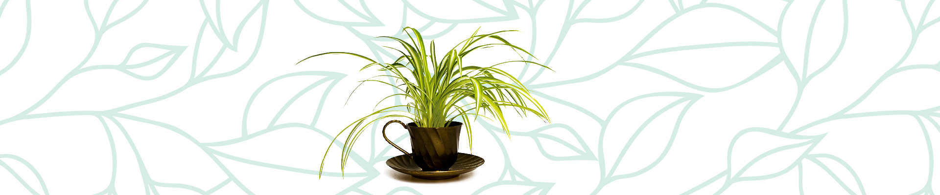 Indoor plants that improve your air quality: Spider Plant