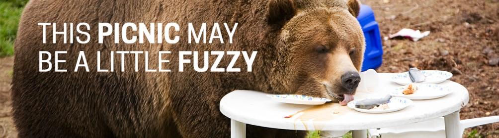 fuzzy picnic