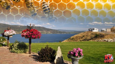 What You Can Do To Help Save The Bees While RVing FEATURE