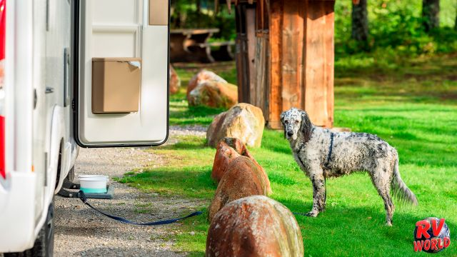 dog outside RV