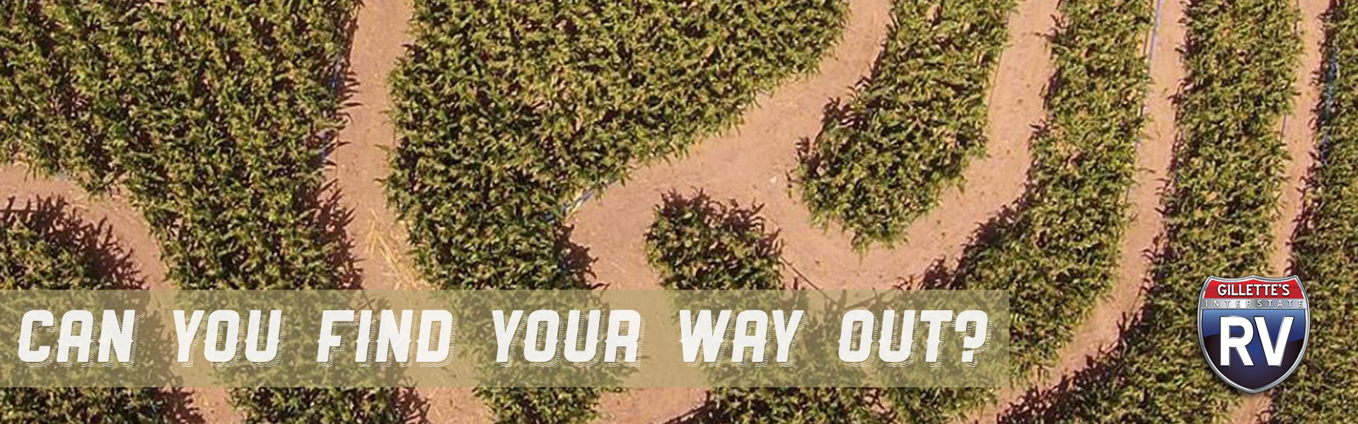 Can you find your way out? Corn maze
