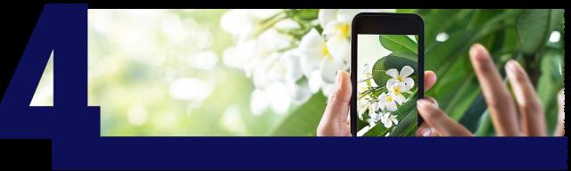 Photo Flowers Phone