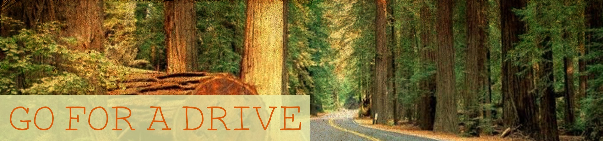 Go for a drive through the Avenue of the Giants