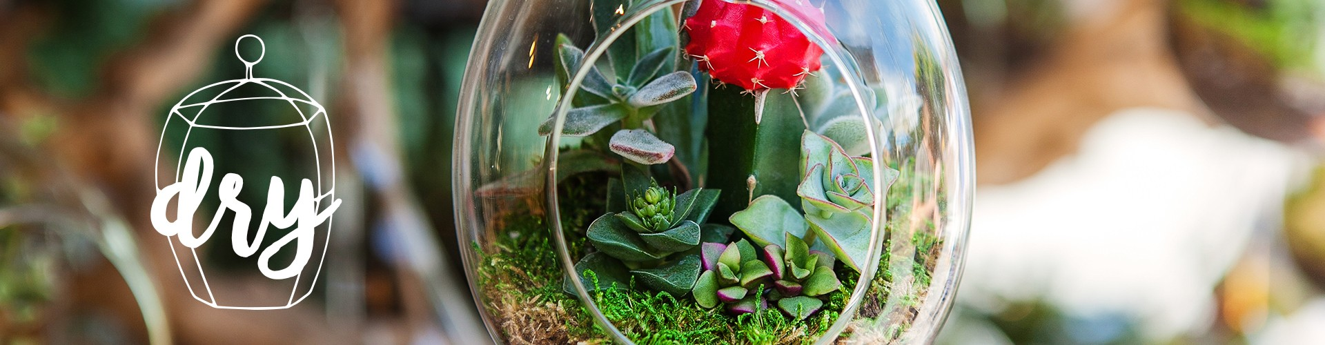 Outdoors Craft: Build Your Own Terrariums  Gillettes