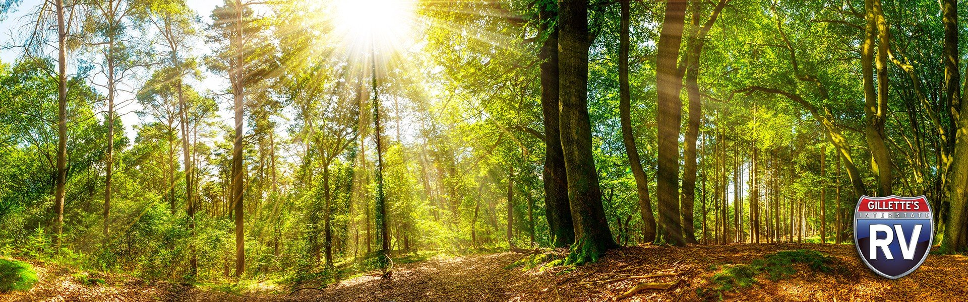 sun-shining-through-the-trees-in-a-forest