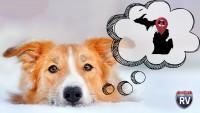 Dog thinking about winter destination