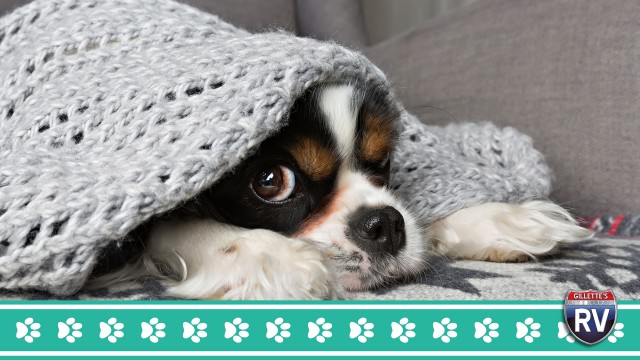 Make Sure To Keep Your Dog Warm While Camping This Winter!