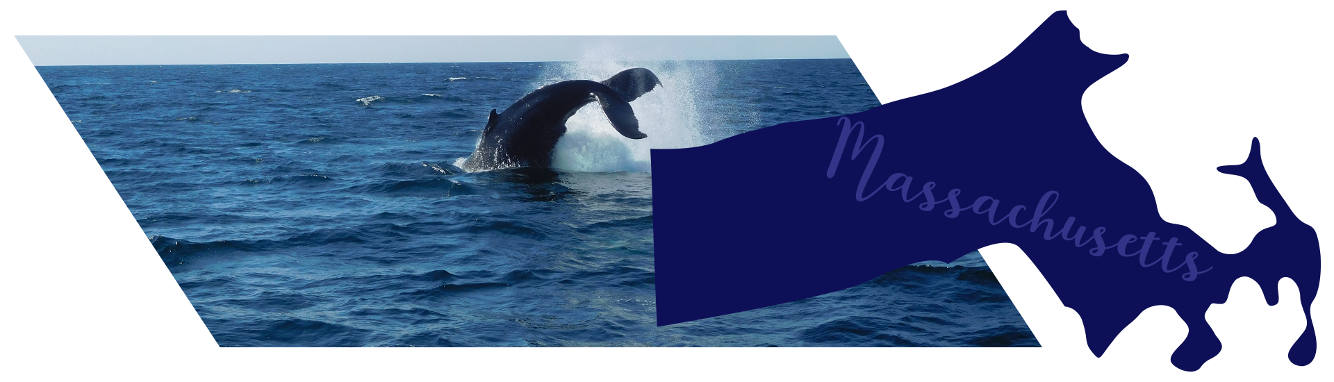 Whale watching at the Stellwagen Bank National Marine Sanctuary in Cape Cod, Massachusetts