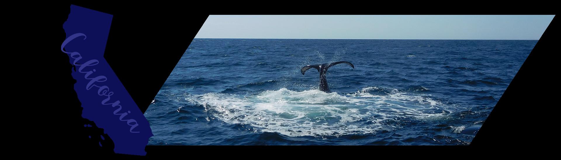 Whale watching in Santa Barbara, California