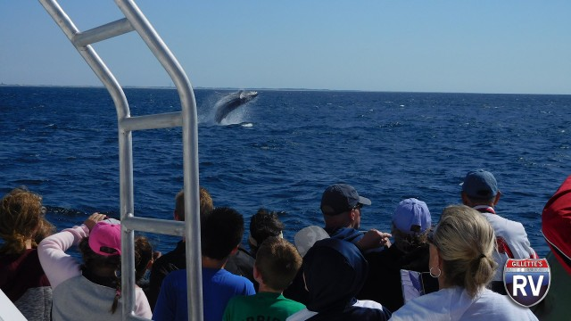 Whale Watching In The Us