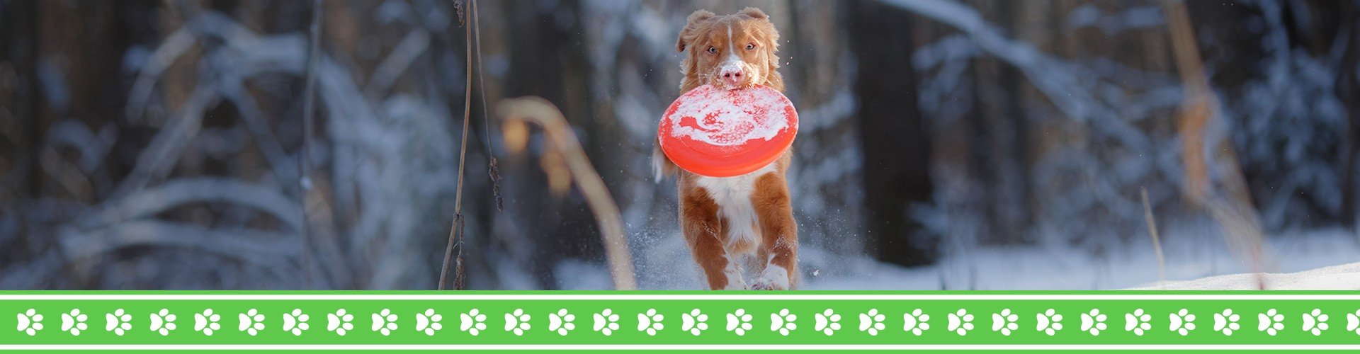 Playing frisbee with a dog in winter.