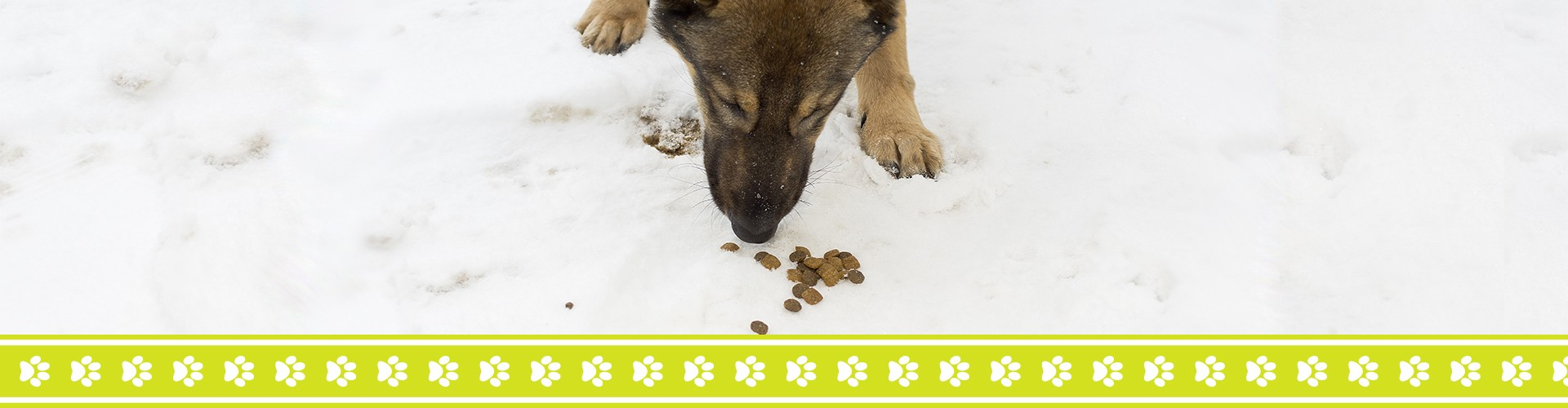 Feeding a dog out in the snow.