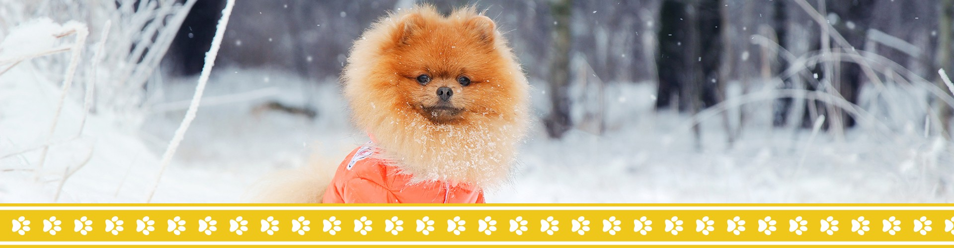 Cute dog in a winter jacket playing in the snow