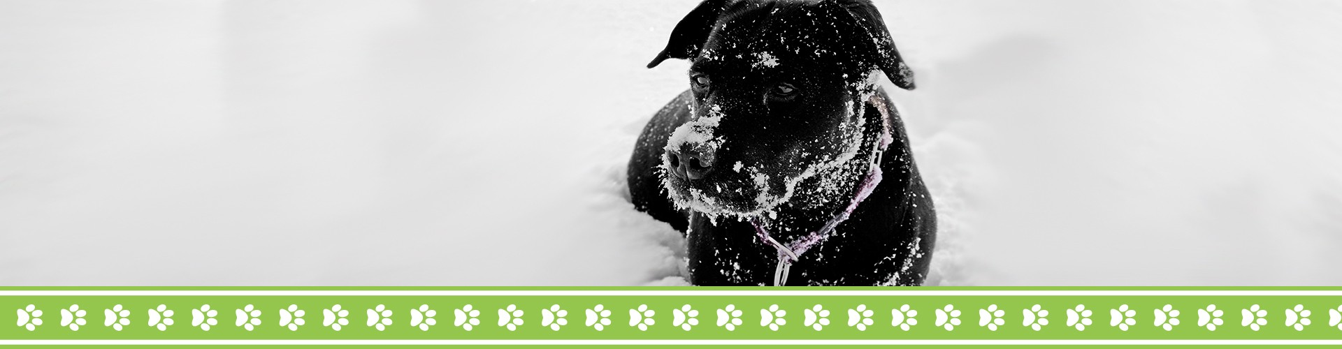 Wet dog in the snow