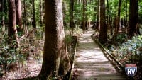 Visit Congaree National Park In Hopkins, SC