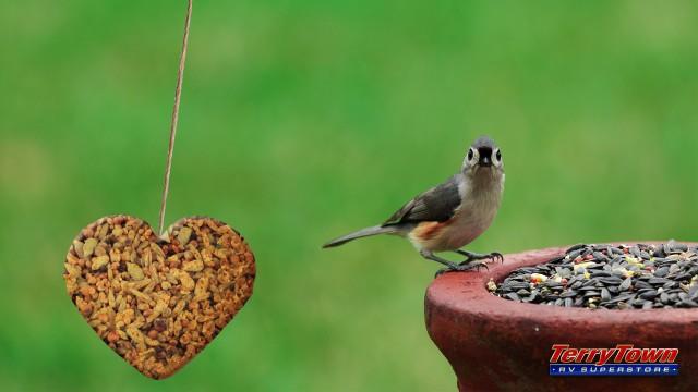heart shaped bird seed feeder
