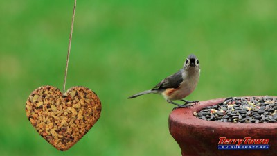 heart shaped bird seed feeder