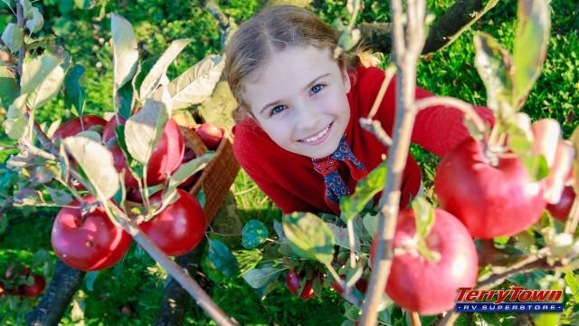 little girl picking apple