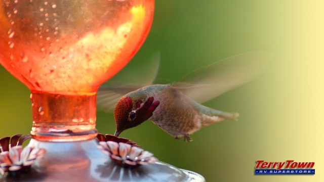 Attracting Hummingbirds to your campsite