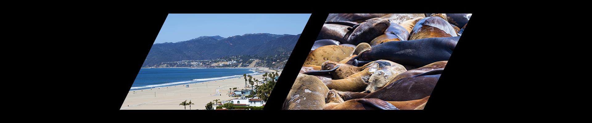 Santa Monica Beach and sea lions in California