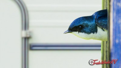 Preventing Birds Nests In Your RV