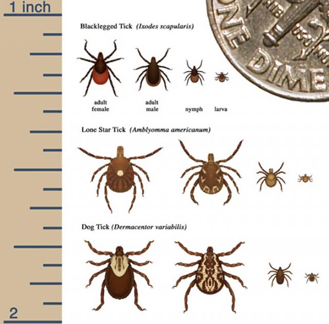 Tick Comparison