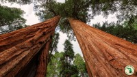 The redwood national and state parks