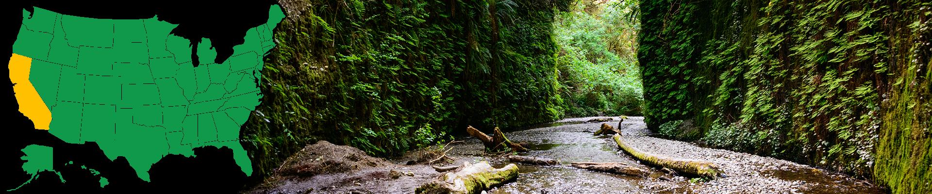 Redwood National Park in California