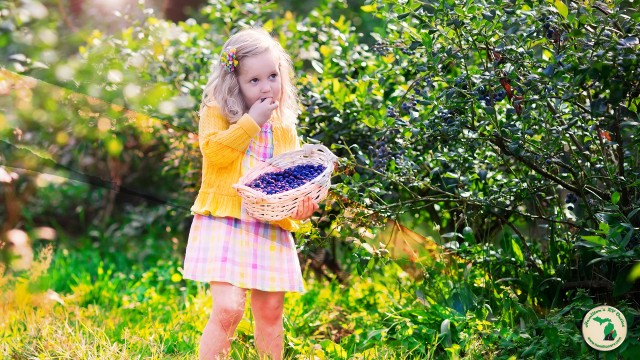 Young Girl Picking Wild Berries