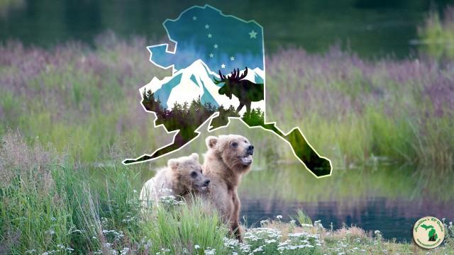 Wild Alaska Katmai National Park