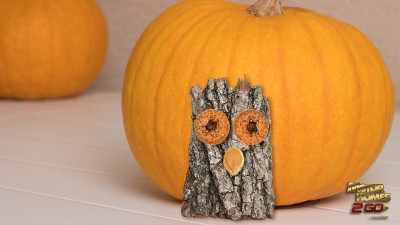 crafty owl on pumpkin